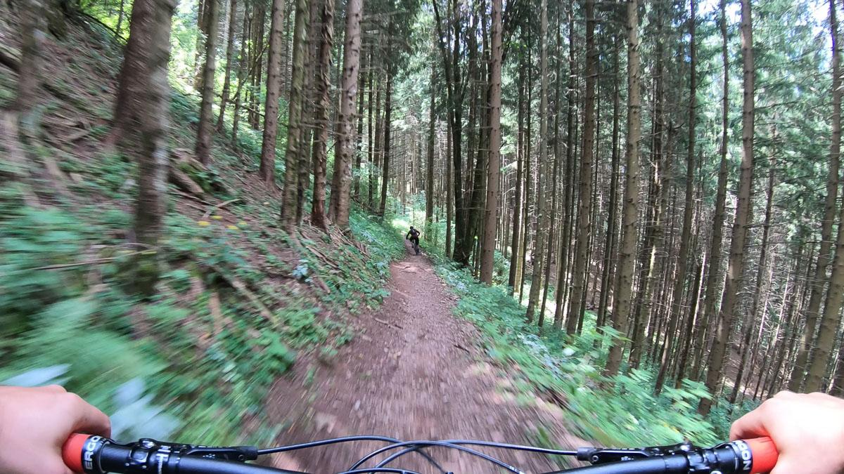Bear Trails