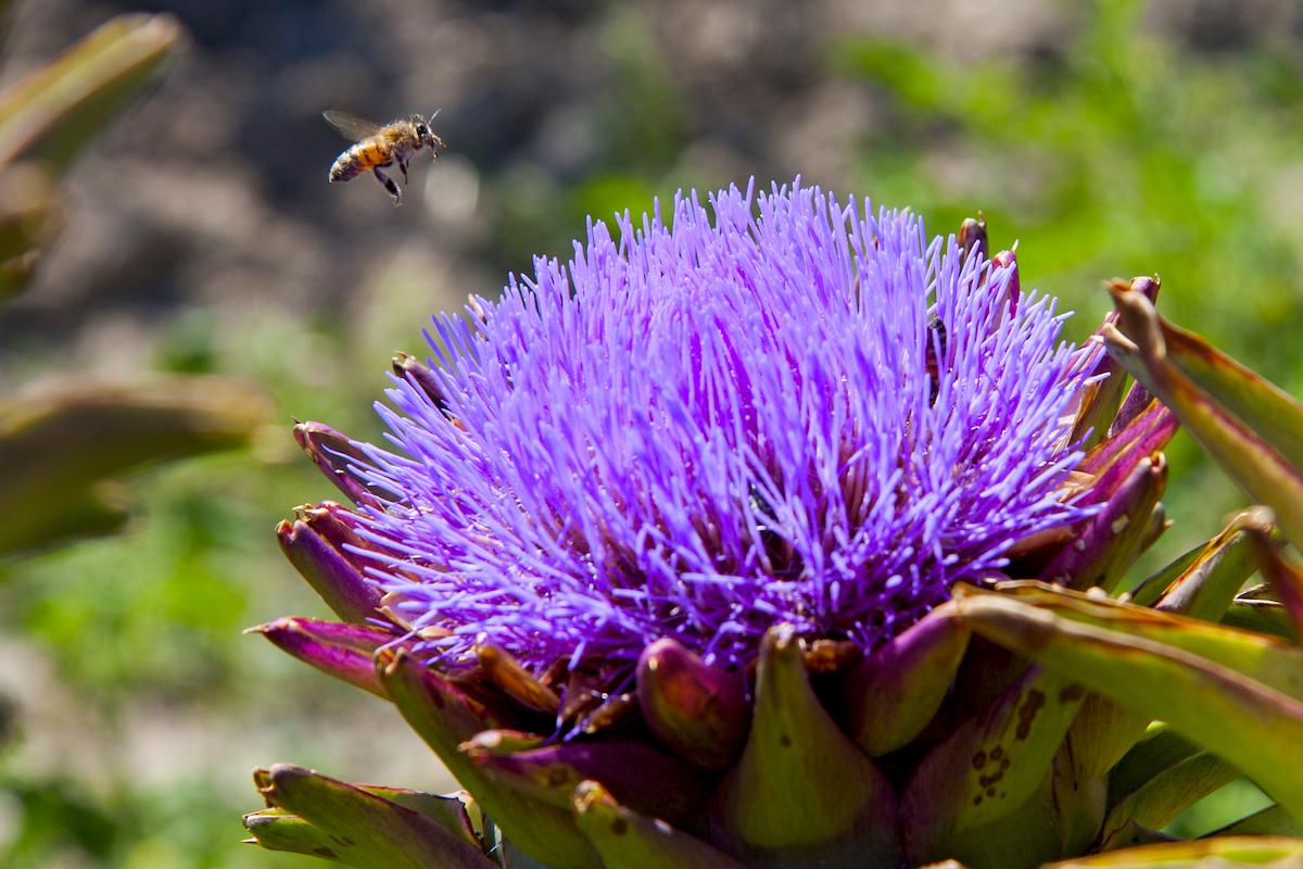 la lezione delle api