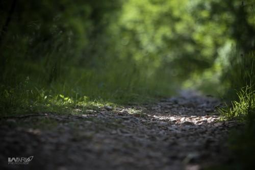 Oltre che belli i sentieri sono anche asciutti. Finalmente...