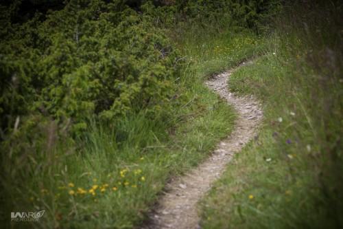 I sentieri del posto sono molto belli. Gola del Furlo è anche un riserva naturalistica di primissimo piano.