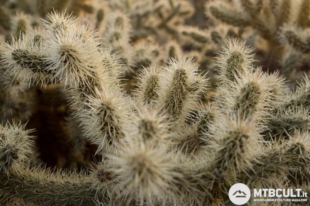 Ecco il nemico: le spine dei cactus che sporgono dal sentiero.