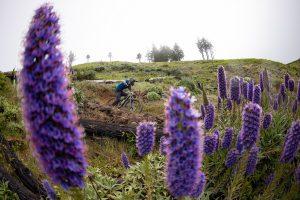 Trans Madeira 2021: fotostoria dei primi tre giorni, che spettacolo!